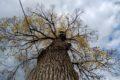 Vaje vrvnih tehnik – vzpon na drevo