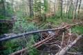 Vaje bolničarjev – delovna nesreča v gozdu, 22.5.2014